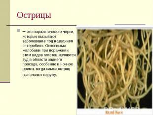 – это паразитические черви, которые вызывают заболевание под названием энтеробио
