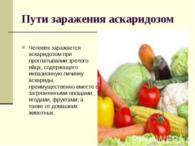 Человек заражается аскаридозом при проглатывании зрелого яйца, содержащего инвазионную личинку аскариды, преимущественно вместе с загрязненными овощами, ягодами, фруктами; а также от домашних животных.