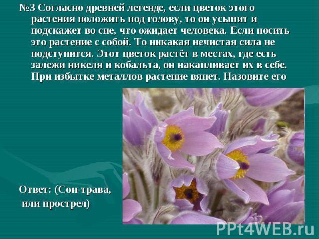 №3 Согласно древней легенде, если цветок этого растения положить под голову, то он усыпит и подскажет во сне, что ожидает человека. Если носить это растение с собой. То никакая нечистая сила не подступится. Этот цветок растёт в местах, где есть зале…
