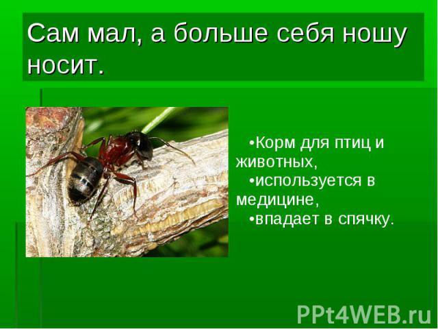 Корм для птиц и животных, Корм для птиц и животных, используется в медицине, впадает в спячку.