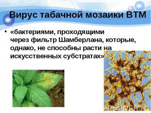 Вирус табачной мозаики ВТМ «бактериями, проходящими черезфильтр Шамберлана