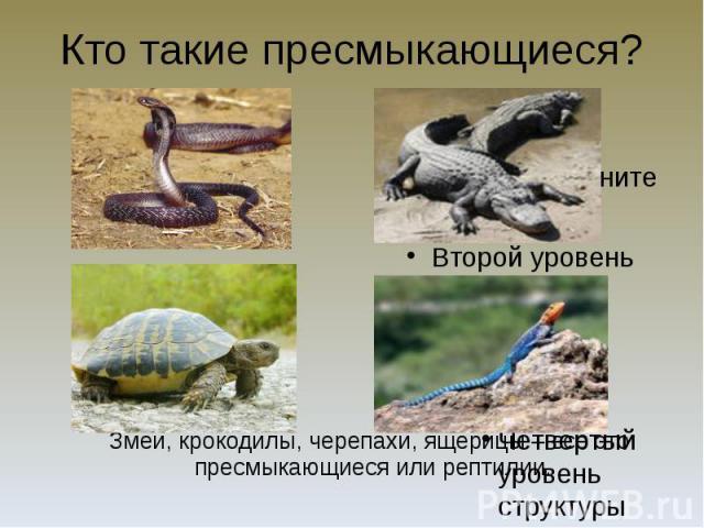 Кто такие пресмыкающиеся? Змеи, крокодилы, черепахи, ящерицы – всё это пресмыкающиеся или рептилии.