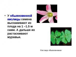 У обыкновенной кислицы семена выскакивают из плода на 1 –1.5 м сами. А дальше их