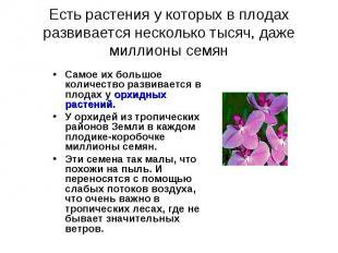 Самое их большое количество развивается в плодах у орхидных растений. Самое их б