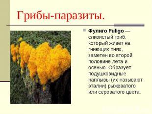 Фулиго Fuligo — слизистый гриб, который живет на гниющих пнях, заметен во второй