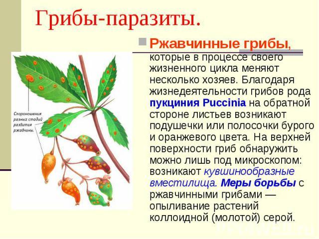 Ржавчинные грибы, которые в процессе своего жизненного цикла меняют несколько хозяев. Благодаря жизнедеятельности грибов рода пукциния Puccinia на обратной стороне листьев возникают подушечки или полосочки бурого и оранжевого цвета. На верхней повер…