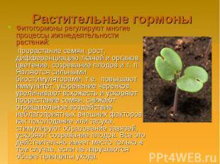 Растительные гормоны Фитогормоны регулируют многие процессы жизнедеятельности ра