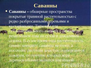 Саванны Саванны – обширные пространства покрытые травяной растительностью с редк