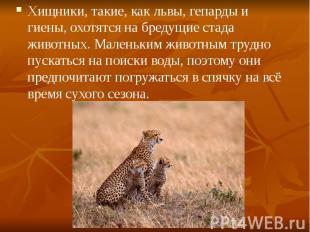 Хищники, такие, как львы, гепарды и гиены, охотятся на бредущие стада животных.