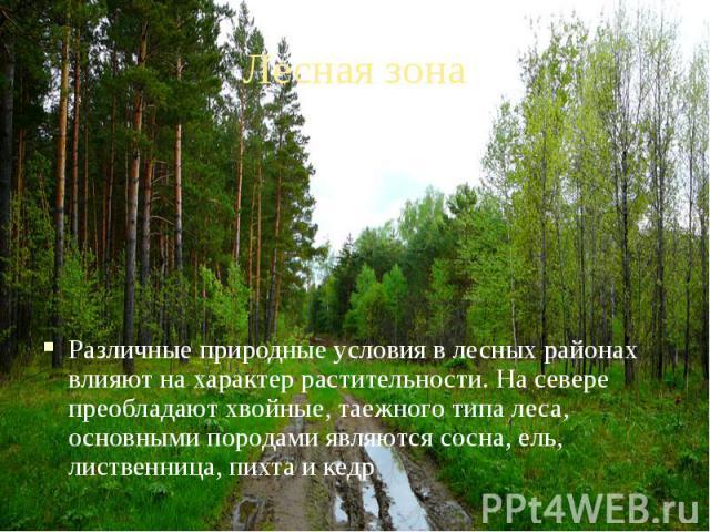 Лесная зона Различные природные условия в лесных районах влияют на характер растительности. На севере преобладают хвойные, таежного типа леса, основными породами являются сосна, ель, лиственница, пихта и кедр