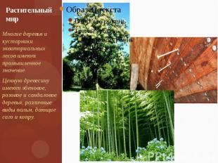Растительный мир Многие деревья и кустарники экваториальных лесов имеют промышле
