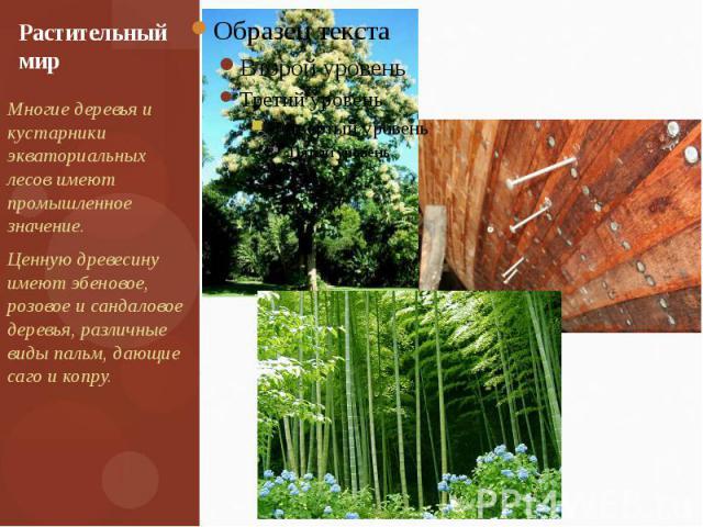 Растительный мир Многие деревья и кустарники экваториальных лесов имеют промышленное значение. Ценную древесину имеют эбеновое, розовое и сандаловое деревья, различные виды пальм, дающие саго и копру.