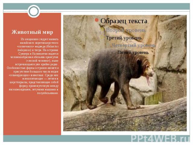 Животный мир Из хищников следует назвать малайского короткошерстного «солнечного» медведя (Helarctos malayanus) и тигра. На островах Суматра и Калимантан водится человекообразная обезьяна орангутан («лесной человек»), ныне встречающаяся уже крайне р…