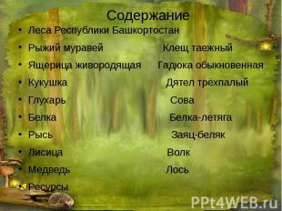 Содержание Леса Республики Башкортостан Рыжий муравей Клещ таежный Ящерица живор