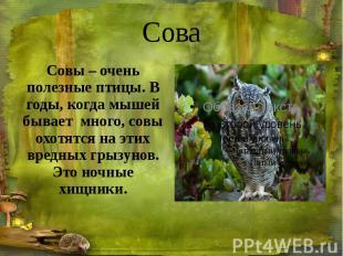 Сова Совы – очень полезные птицы. В годы, когда мышей бывает много, совы охотятс