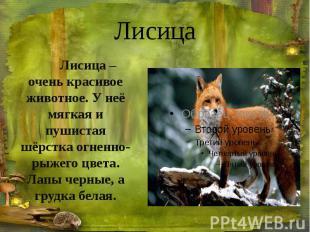 Лисица Лисица – очень красивое животное. У неё мягкая и пушистая шёрстка огненно