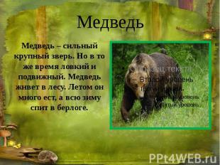 Медведь Медведь – сильный крупный зверь. Но в то же время ловкий и подвижный. Ме