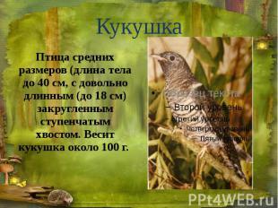 Кукушка Птица средних размеров (длина тела до 40 см, с довольно длинным (до 18 с