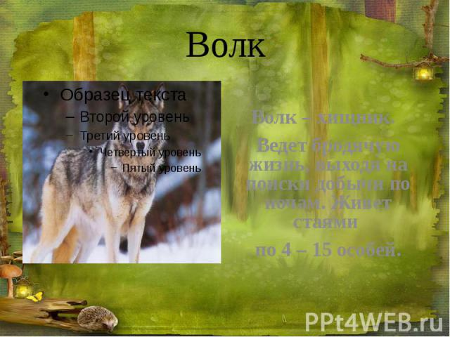 Волк Волк – хищник. Ведет бродячую жизнь, выходя на поиски добычи по ночам. Живет стаями по 4 – 15 особей.
