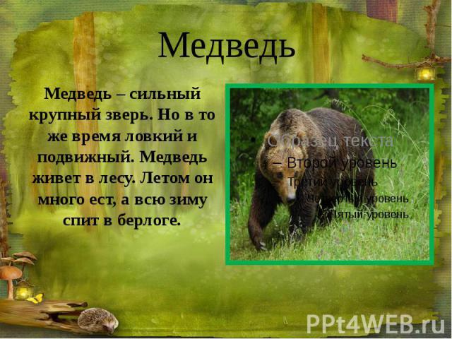 Медведь Медведь – сильный крупный зверь. Но в то же время ловкий и подвижный. Медведь живет в лесу. Летом он много ест, а всю зиму спит в берлоге.