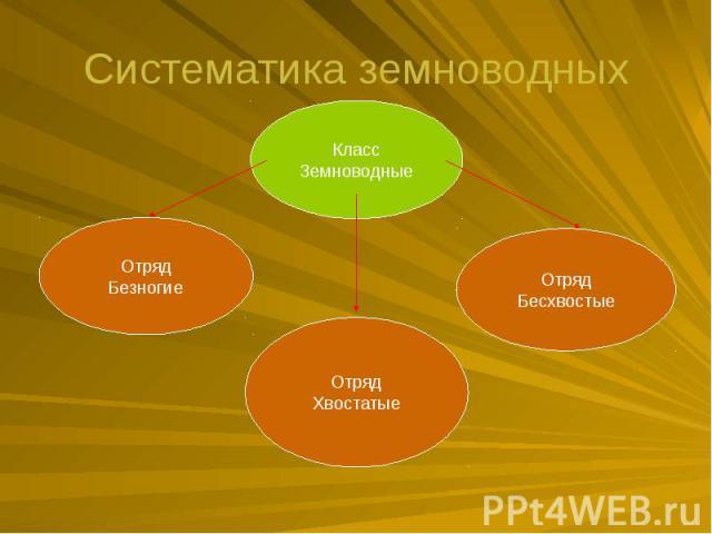 Систематика земноводных
