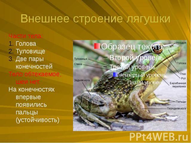 Внешнее строение лягушки