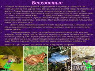 Последний и наиболее высокоразвитый отряд современных земноводных – бесхвостые.