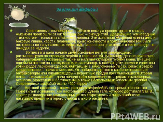 Современные земноводные – остатки некогда процветавшего класса. Амфибии произошли от кистепёрых рыб – рипидистий. Древнейшие земноводные – ихтиостеги – известны с верхнего девона. Эти животные метровой длины имели боковую линию, хвост с плавником, н…