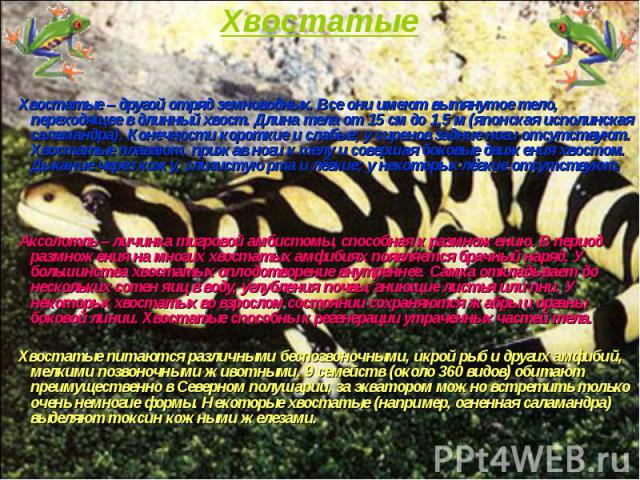 Хвостатые – другой отряд земноводных. Все они имеют вытянутое тело, переходящее в длинный хвост. Длина тела от 15см до 1,5м (японская исполинская саламандра). Конечности короткие и слабые; у сиренов задние ноги отсутствуют. Хвостатые пла…