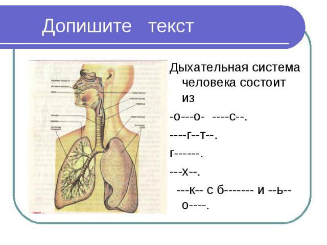 Дыхательная система человека состоит из Дыхательная система человека состоит из -о---о- ----с--. ----г--т--. г------. ---х--. ---к-- с б------- и --ь--о----.