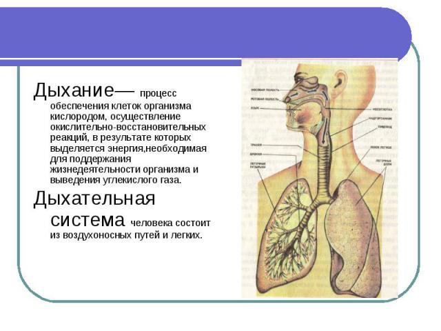 Дыхание— процесс обеспечения клеток организма кислородом, осуществление окислительно-восстановительных реакций, в результате которых выделяется энергия,необходимая для поддержания жизнедеятельности организма и выведения углекислого газа. Дыхание— пр…