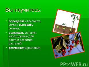 определять всхожесть семян; высевать семена; определять всхожесть семян; высеват