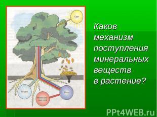 Каков Каков механизм поступления минеральных веществ в растение?