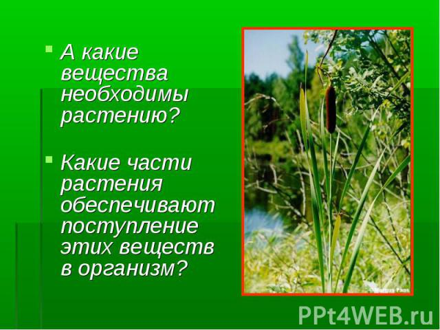 А какие вещества необходимы растению? А какие вещества необходимы растению? Какие части растения обеспечивают поступление этих веществ в организм?