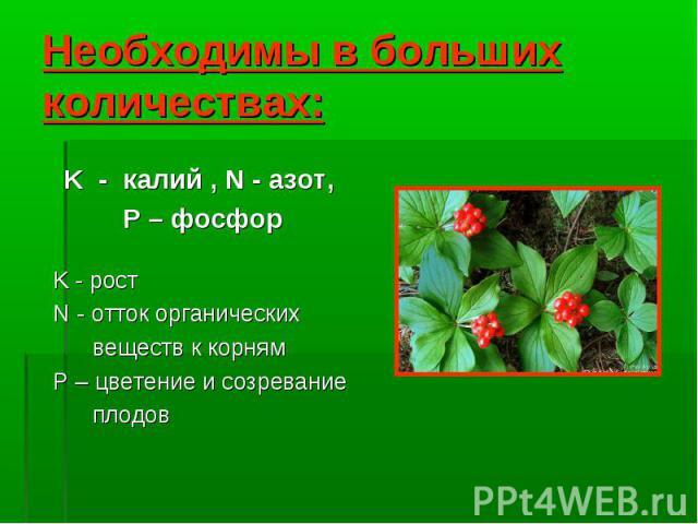 K - калий , N - азот, P – фосфор K - рост N - отток органических веществ к корням P – цветение и созревание плодов
