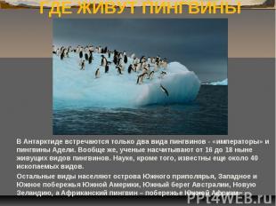 ГДЕ ЖИВУТ ПИНГВИНЫ В Антарктиде встречаются только два вида пингвинов - «императ