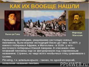КАК ИХ ВООБЩЕ НАШЛИ Первыми европейцами, увидевшими настоящих южных пингвинов, б