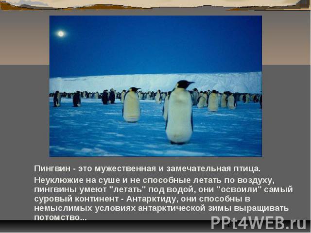 """Пингвин - это мужественная и замечательная птица. Пингвин - это мужественная и замечательная птица. Неуклюжие на суше и не способные летать по воздуху, пингвины умеют """"летать"""" под водой, они """"освоили"""" самый суровый континент - Ан…"""