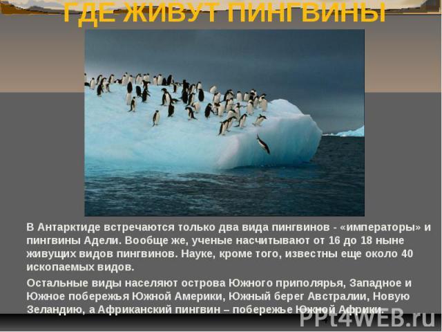 ГДЕ ЖИВУТ ПИНГВИНЫ В Антарктиде встречаются только два вида пингвинов - «императоры» и пингвины Адели. Вообще же, ученые насчитывают от 16 до 18 ныне живущих видов пингвинов. Науке, кроме того, известны еще около 40 ископаемых видов. Остальные виды …