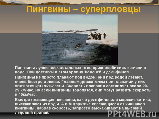 Пингвины – суперпловцы Пингвины лучше всех остальных птиц приспособились к жизни в воде. Они достигли в этом уровня тюленей и дельфинов. Пингвины не просто плавают под водой, они под водой летают, очень быстро и ловко. Главным движителем при плавани…