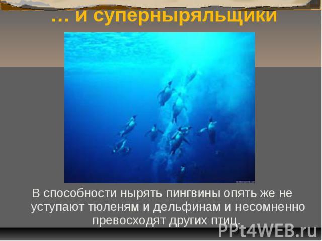 … и суперныряльщики В способности нырять пингвины опять же не уступают тюленям и дельфинам и несомненно превосходят других птиц.