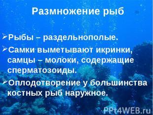 Рыбы – раздельнополые. Рыбы – раздельнополые. Самки выметывают икринки, самцы –