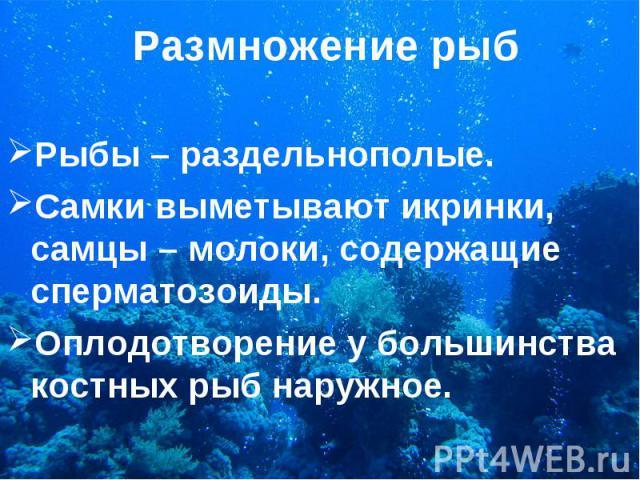 Рыбы – раздельнополые. Рыбы – раздельнополые. Самки выметывают икринки, самцы – молоки, содержащие сперматозоиды. Оплодотворение у большинства костных рыб наружное.