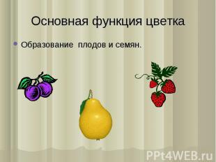 Образование плодов и семян. Образование плодов и семян.