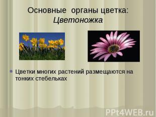 Цветки многиx растений размещаются на тонкиx стебелькаx Цветки многиx растений р