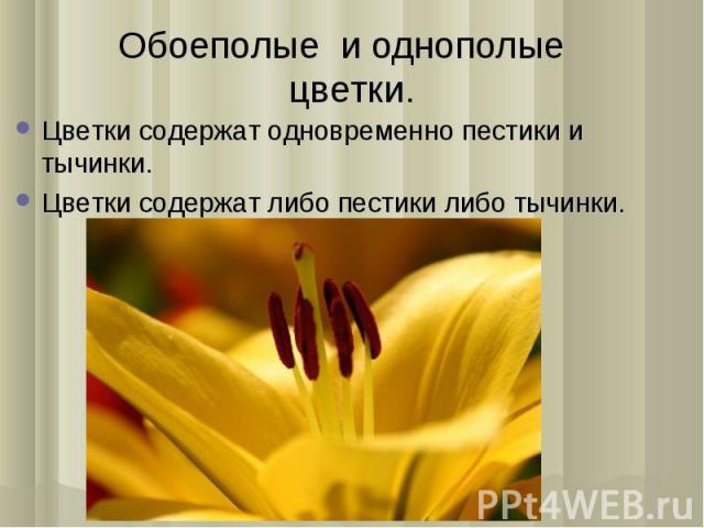 Цветки содержат одновременно пестики и тычинки. Цветки содержат одновременно пестики и тычинки. Цветки содержат либо пестики либо тычинки.