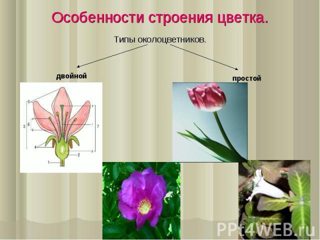 Типы околоцветников. Типы околоцветников.