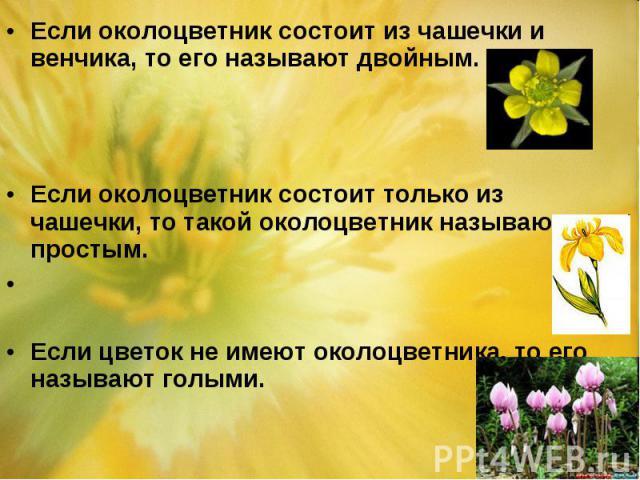 Если околоцветник состоит из чашечки и венчика, то его называют двойным. Если околоцветник состоит из чашечки и венчика, то его называют двойным. Если околоцветник состоит только из чашечки, то такой околоцветник называют простым. Если цветок не име…