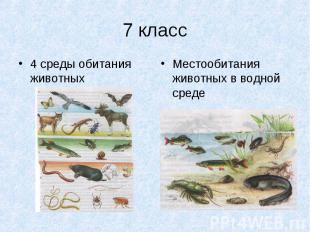 4 среды обитания животных 4 среды обитания животных