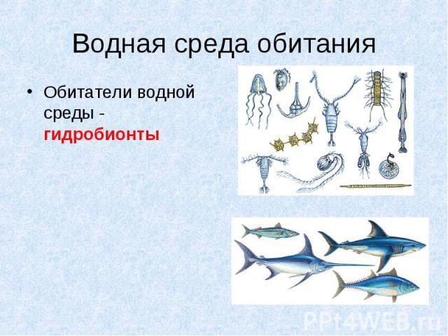 Обитатели водной среды - гидробионты Обитатели водной среды - гидробионты